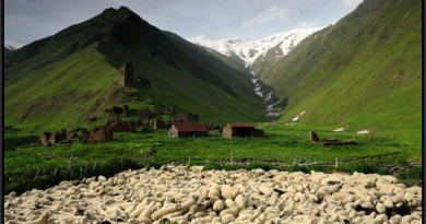 RAPID ASSESSMENT OF SHEEP SECTOR IN GEORGIA